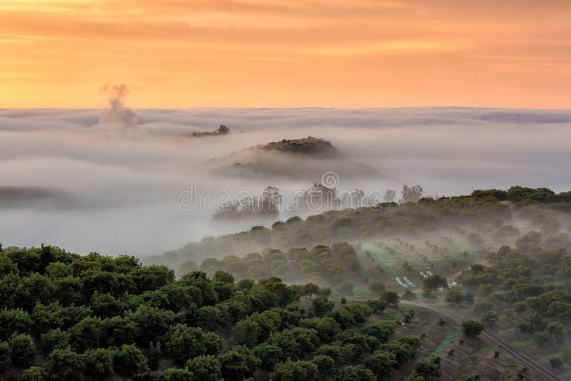 Nebel, der über dem vinyard zurückbleibt lizenzfreie stockfotos