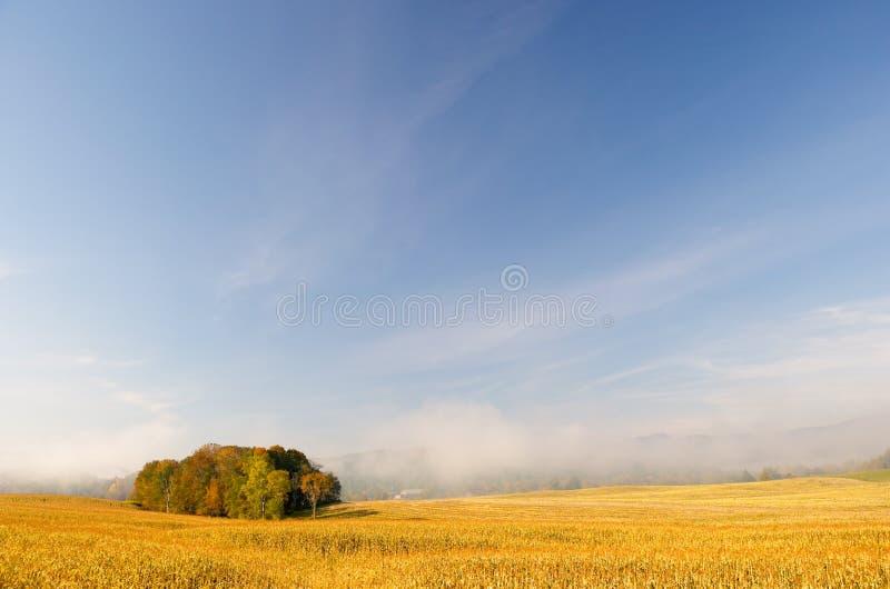 Nebel des frühen Morgens über einem Feld von Mais. stockfotografie