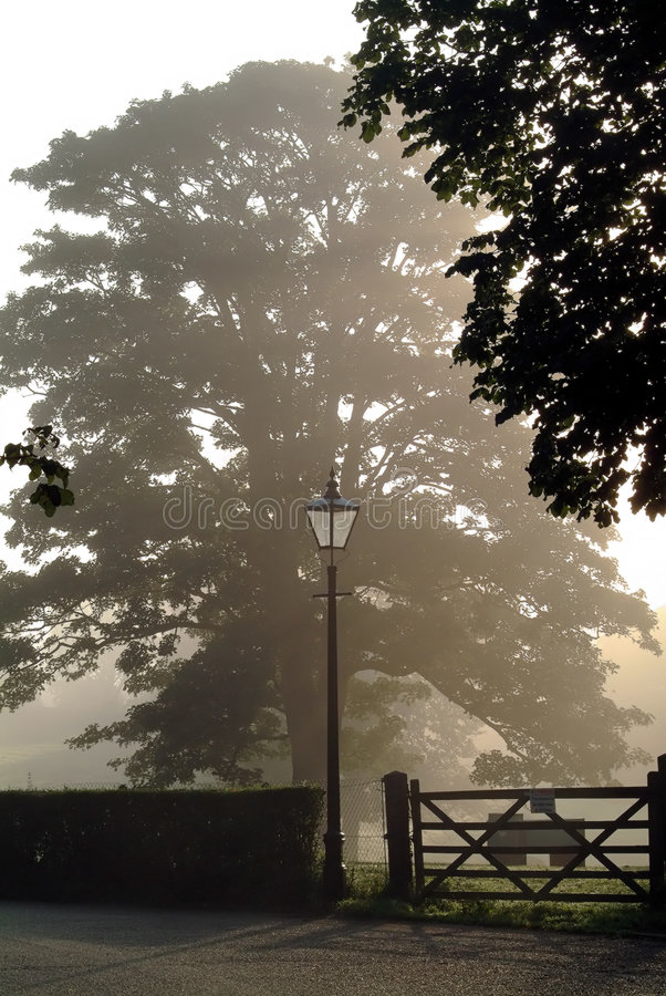 Nebel des frühen Morgens stockbilder