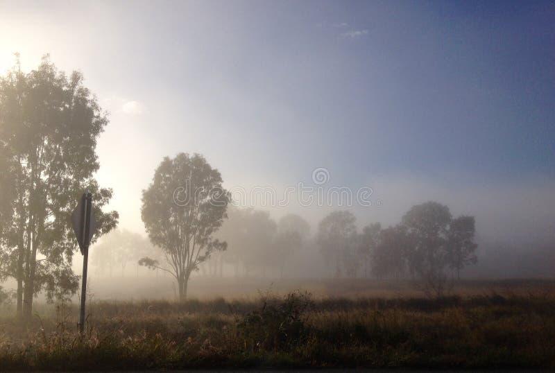 Nebel des frühen Morgens, der australische ländliche Hinterlandlandschaft umfasst lizenzfreies stockfoto