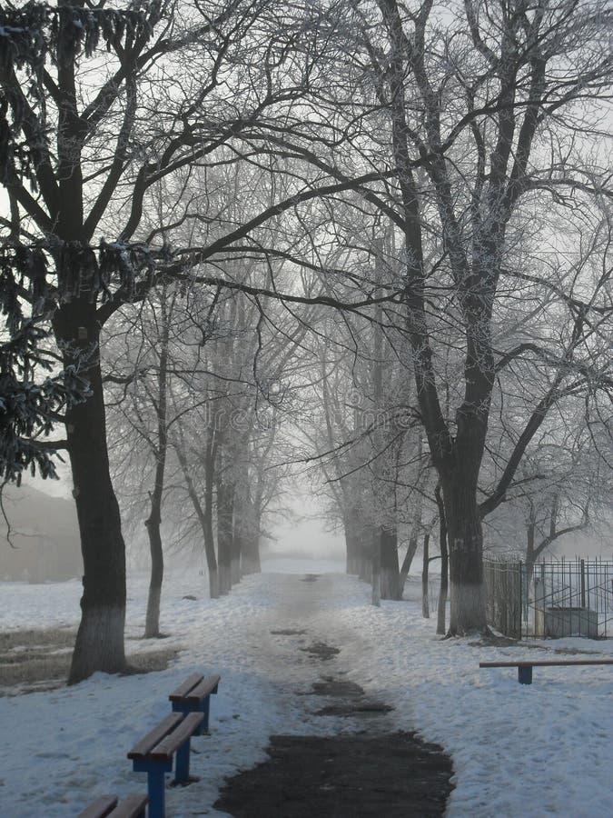 Nebel des frühen Morgens des Winterparks stockbilder