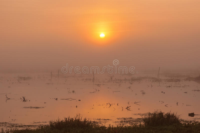 Nebel des Sonnenaufgangs am frühen Morgen lizenzfreies stockfoto