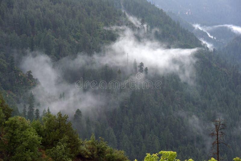 Nebel in einem bewaldeten Tal lizenzfreie stockfotografie