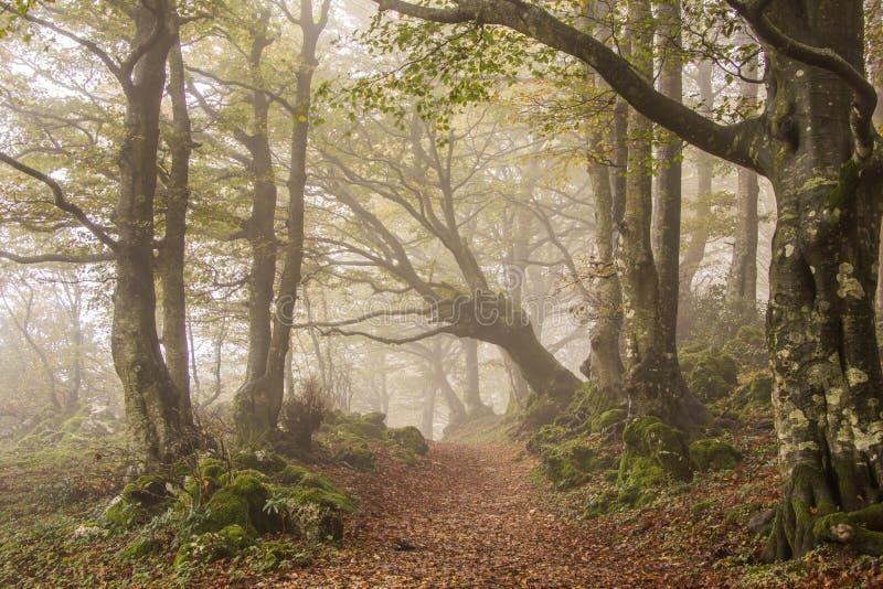 Nebel im Herbstwald lizenzfreie stockbilder