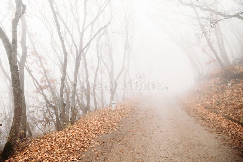 Nebel im mystischen Herbstwald lizenzfreies stockbild