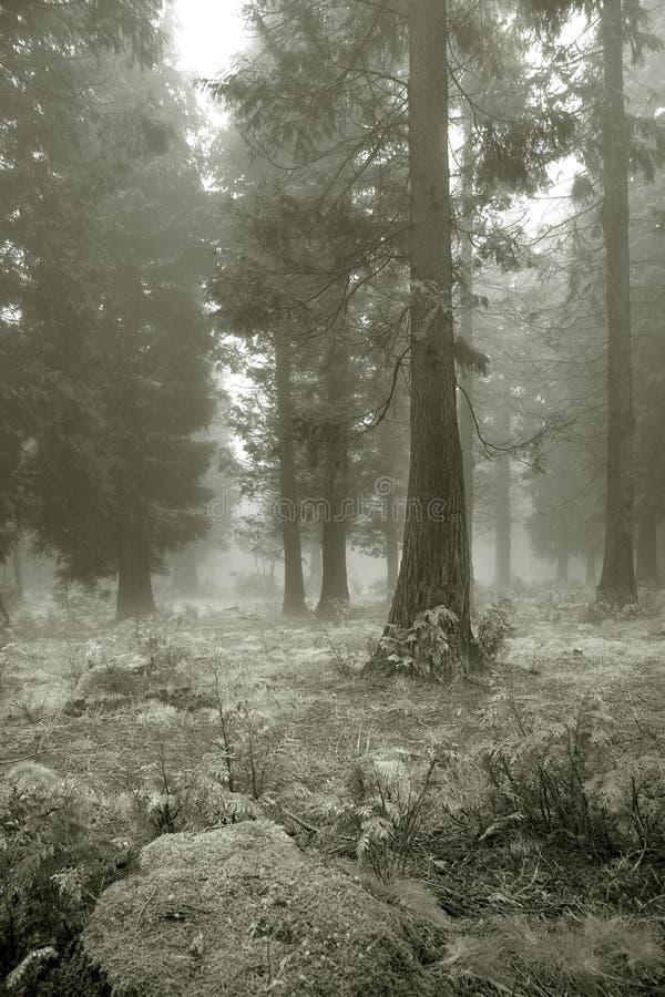 Nebel im Wald lizenzfreies stockbild
