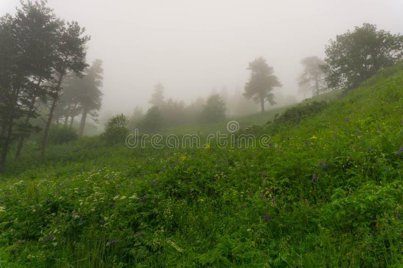 Nebel im Wald stockfoto