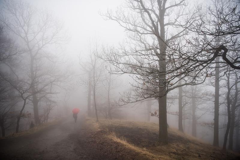 Nebel im Wald in Harz-Bergen Deutschland lizenzfreies stockbild