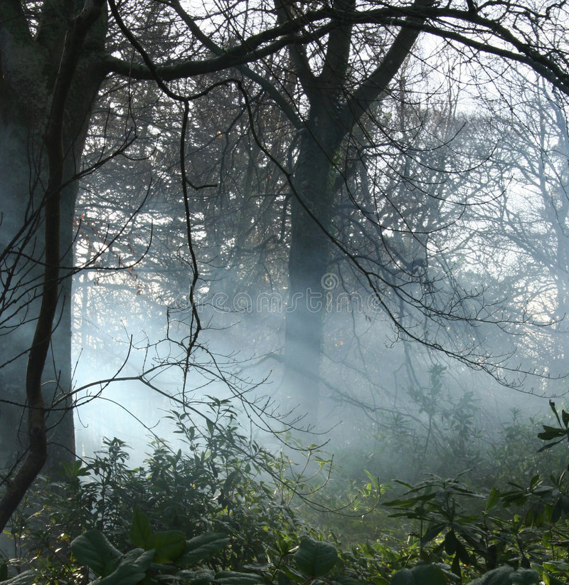 Nebel im Waldland lizenzfreie stockbilder