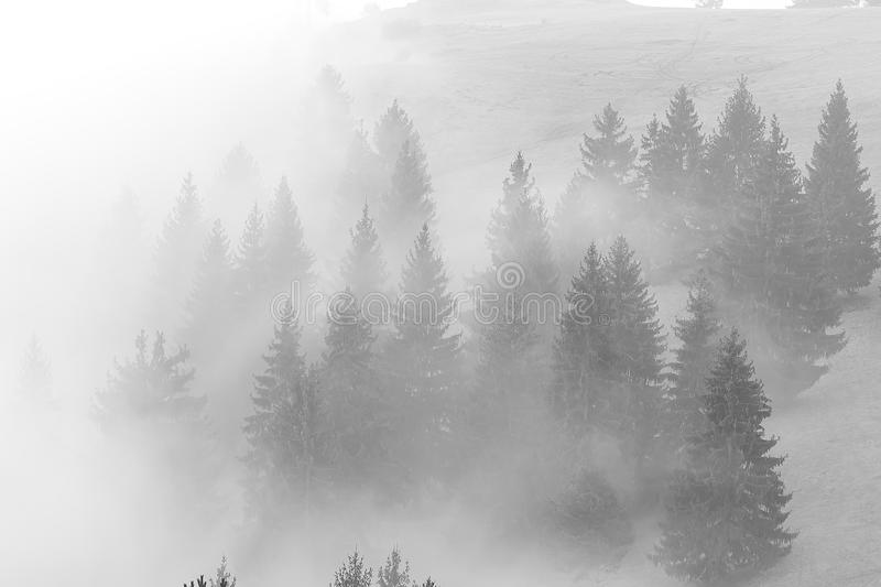 Nebel klettert auf dem Hügel vor dem Sonnenaufgang lizenzfreies stockbild