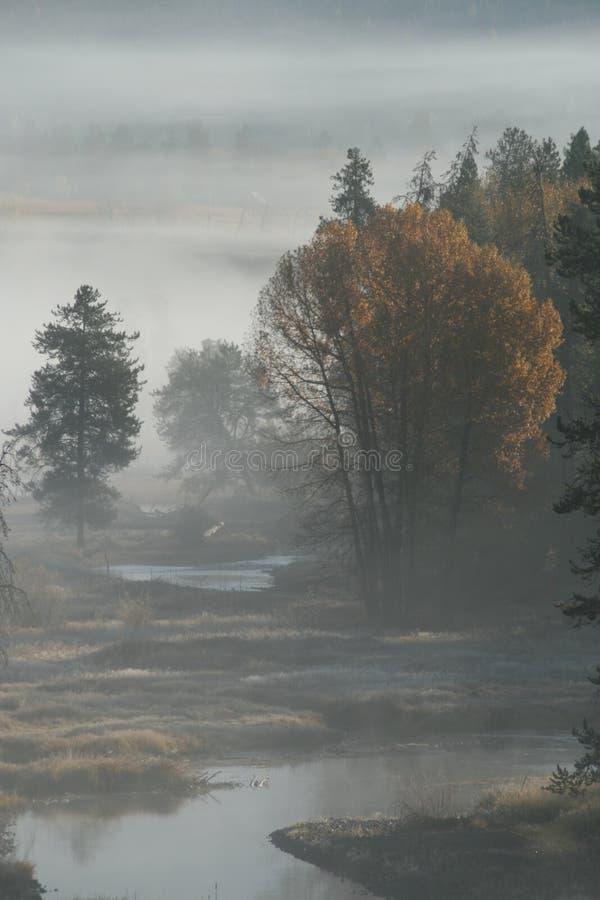 Nebel morgens lizenzfreie stockfotos