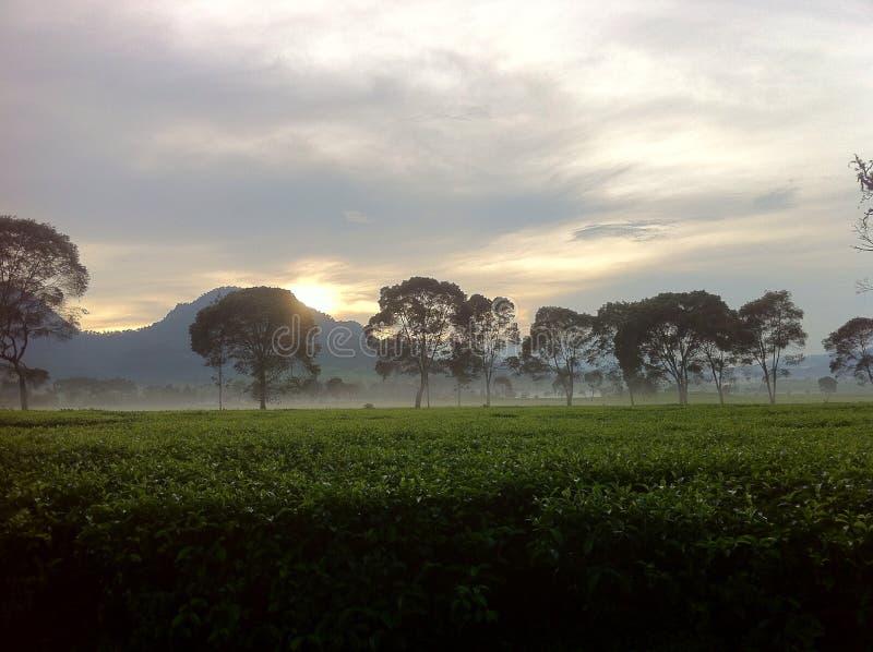 Nebel oben lizenzfreies stockfoto