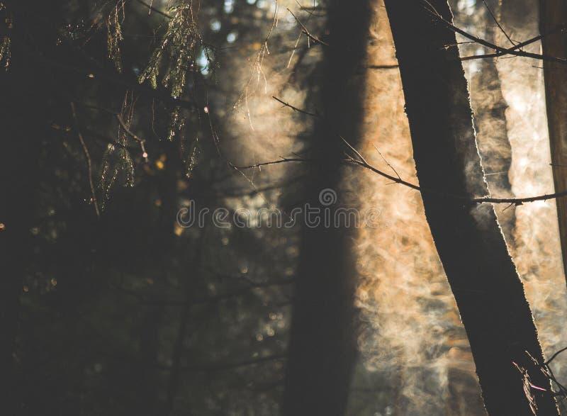 Nebel und Strom von den Bäumen lizenzfreies stockbild