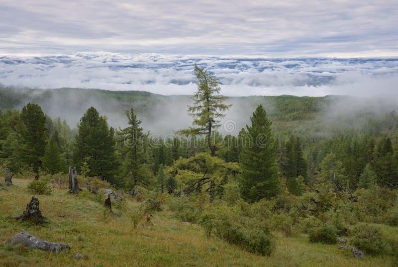 Nebel unten von den Bergen lizenzfreie stockfotografie