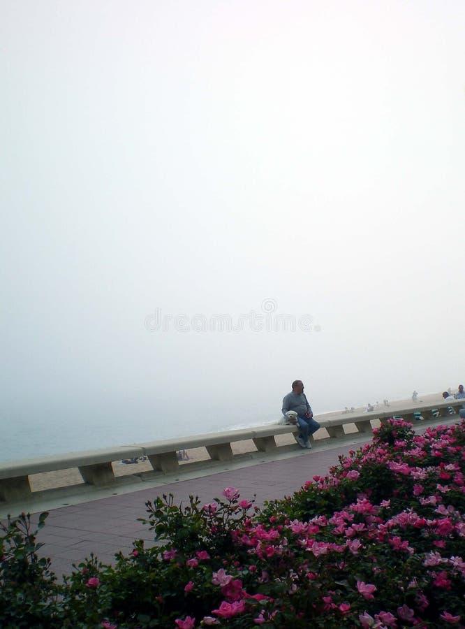 Nebel vom Meer stockbilder