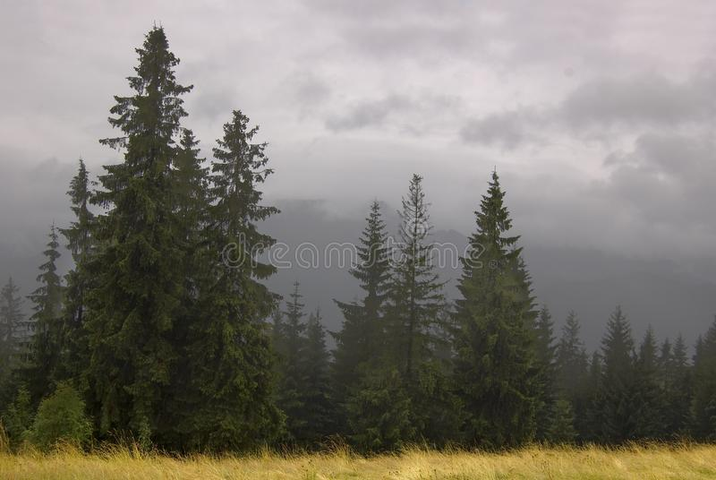 Nebel in Zakopane stockbild