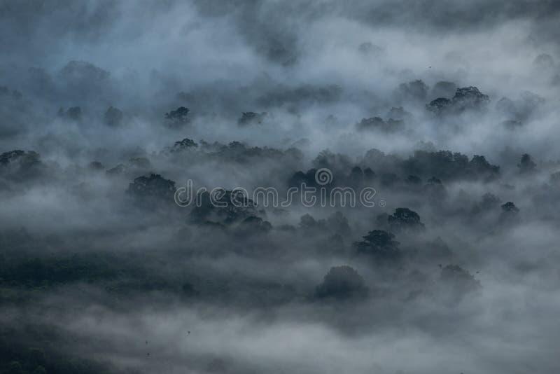 Nebelabdeckung der Wald morgens stockfotografie