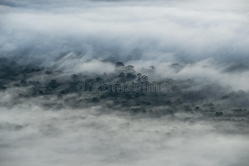Nebelabdeckung der Wald morgens lizenzfreies stockbild