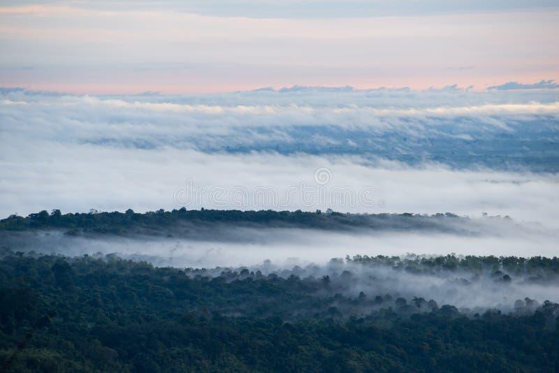 Nebelabdeckung der Wald morgens stockbild