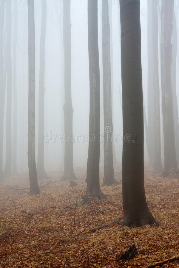 Nebelhafte Atmosphäre im Wald lizenzfreie stockbilder
