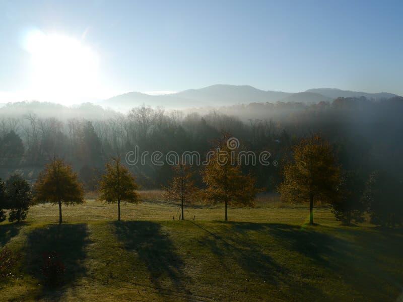 Nebelhafte Bäume stockfotos