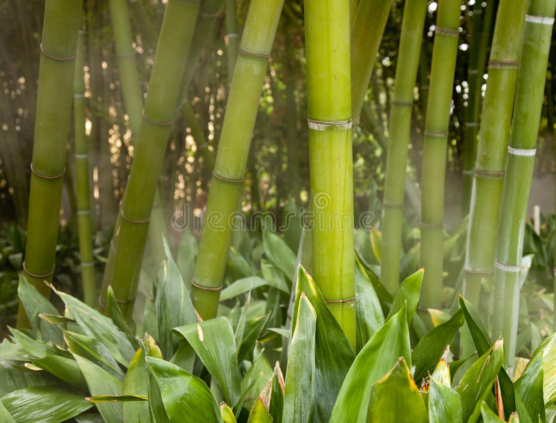 Nebelhafte Bambusstämme lizenzfreie stockfotos