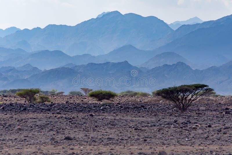 Nebelhafte Berge mit einigen Bäumen in der Steinwüste des nördlichen Teils Arabische Emirates stockfotos