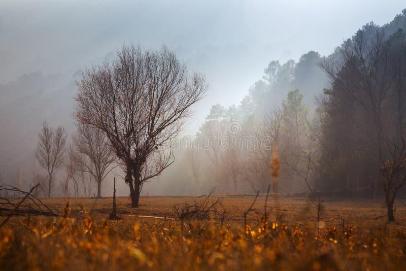 Nebelhafte Dämmerung über bewaldeten Bergen stockbilder