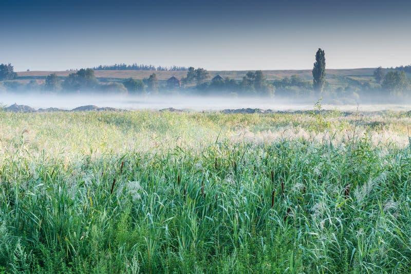 Nebelhafte Dämmerung in dem See lizenzfreies stockbild