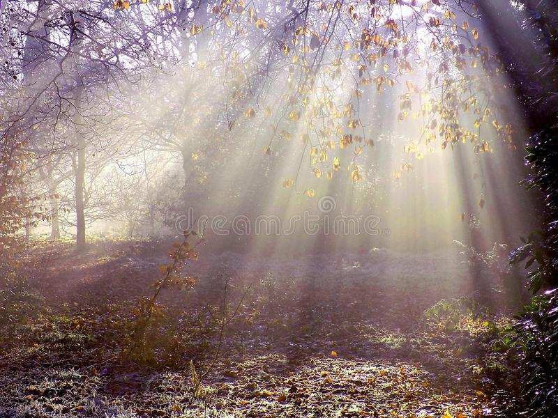 Nebelhafte helle Strahlen im Herbst lizenzfreie stockbilder