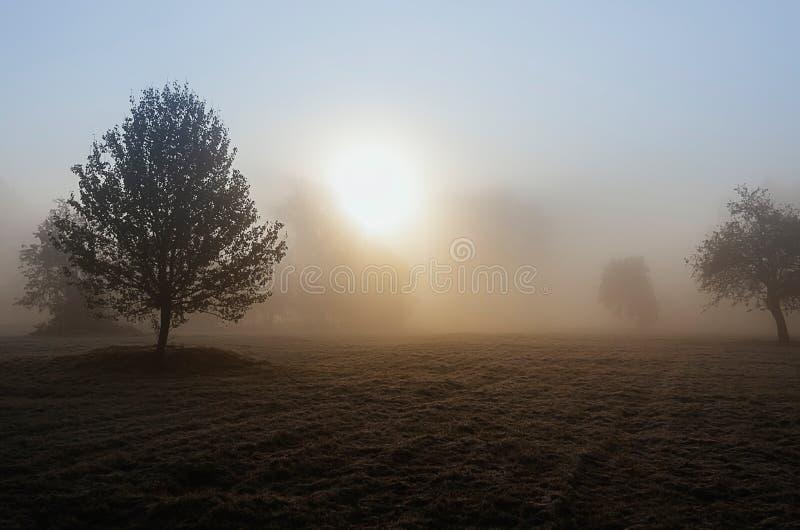Nebelhafte Herbstdämmerung stockfotografie