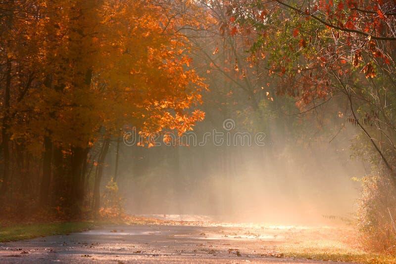Nebelhafte Herbstlandschaft lizenzfreies stockfoto