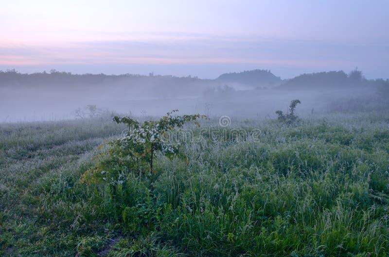Nebelhafte Landschaft des Frühlinges in der Landschaft stockfotos