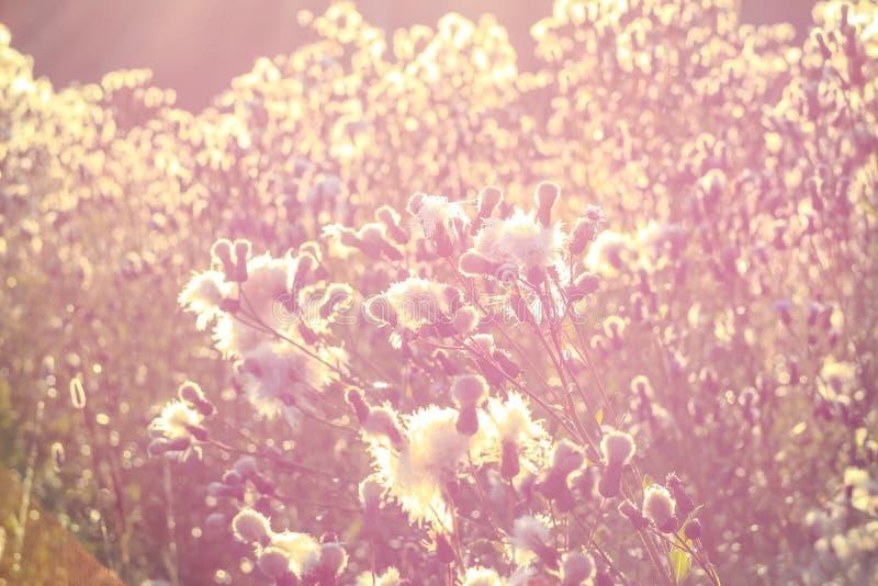 Nebelhafte Landschaft des ruhigen Frühlinges des Feldes an der Dämmerung lizenzfreie stockbilder