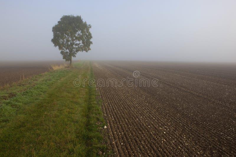 Nebelhafte Morgenfelder stockfotografie