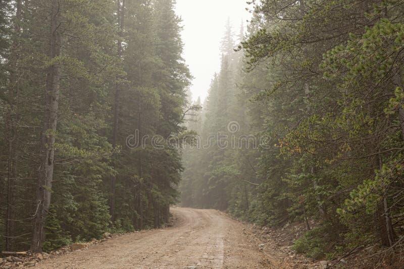 Nebelhafte Straße lizenzfreie stockbilder