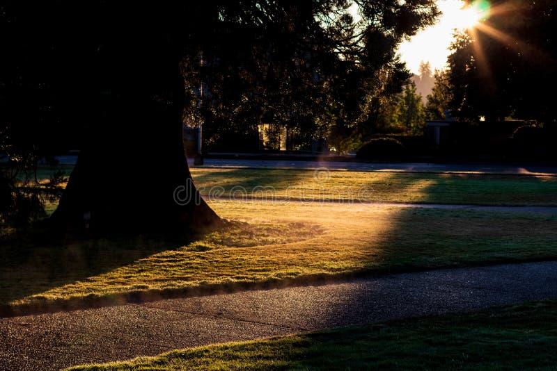 Nebelhafter Dunst des Morgens weg von einem Rasen mit einem Fußweg stockbilder