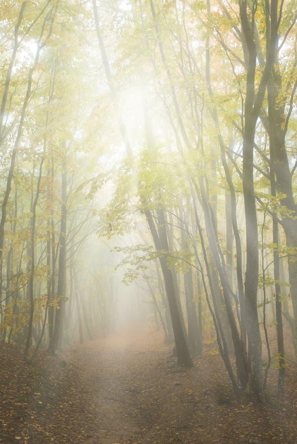 Nebelhafter gelber Herbstwald lizenzfreie stockfotos