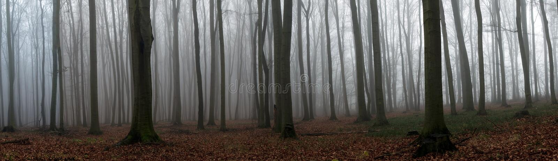 Nebelhafter Herbst lizenzfreies stockbild