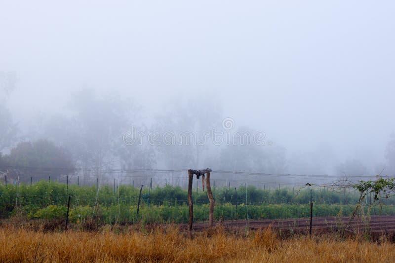 Nebelhafter Morgen über Ackerland stockfotos