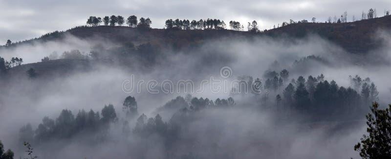 Nebelhafter Morgen stockfotos