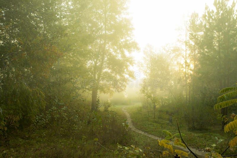 Nebelhafter Morgen auf den Waldschönen Herbstbäumen auf einem Nebel stockbilder