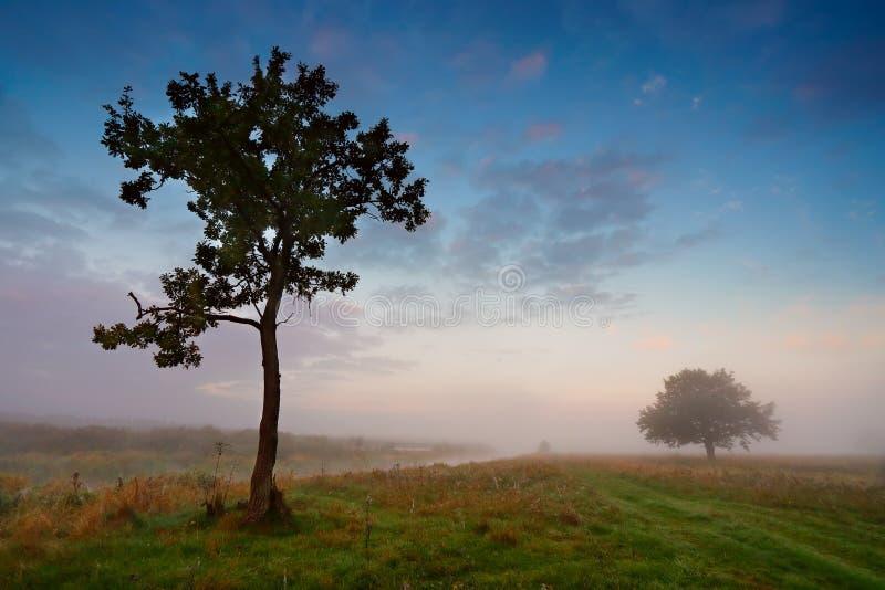 Nebelhafter Morgen auf einem Fluss Einzige Bäume auf einer grünen Wiese stockfoto