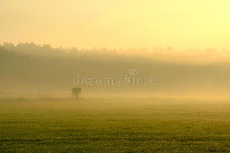 Nebelhafter Morgen auf Waldfeld lizenzfreies stockfoto