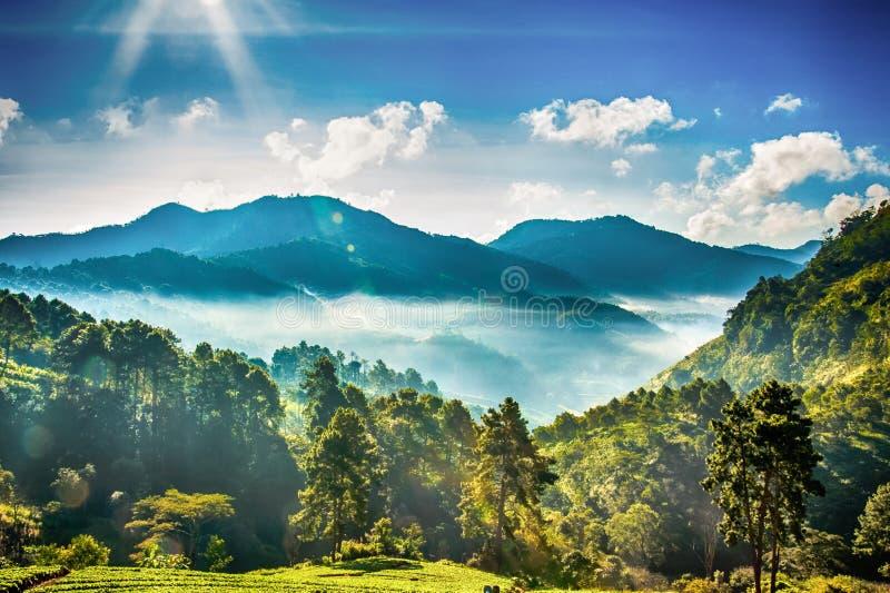 Nebelhafter Morgen im Erdbeerbauernhof an doi angkhang Berg, chian lizenzfreie stockfotos