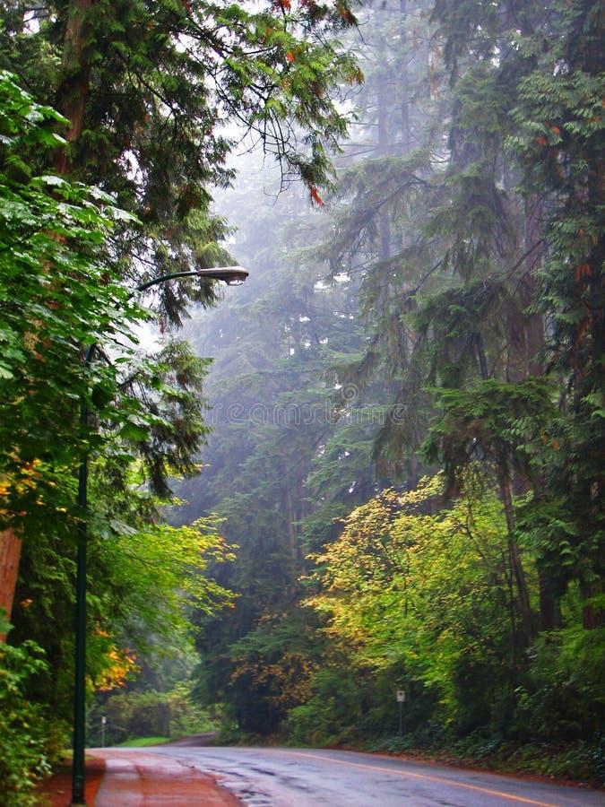 Nebelhafter Morgen-Weg im Holz lizenzfreie stockfotos