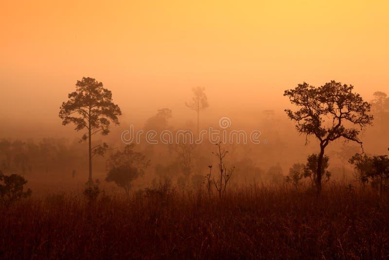 Nebelhafter Morgensonnenaufgang in den Bergen in Phetchabun lizenzfreies stockbild