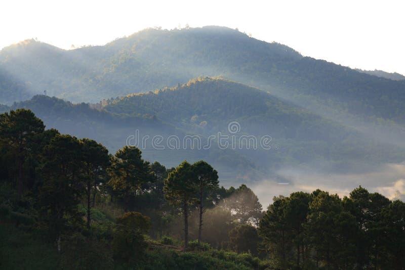 Nebelhafter Morgensonnenaufgang an Doi-angkhang Berg, chiangmai: thailändisch stockbilder