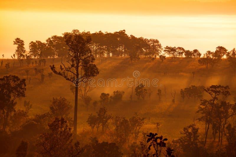 Nebelhafter Morgensonnenaufgang im Berg an Staatsangehörigem Thung Salang Luang stockbilder