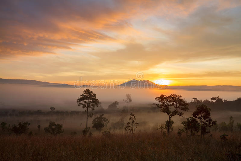 Nebelhafter Morgensonnenaufgang an Nationalpark Phetch Thung Salang Luang stockfoto